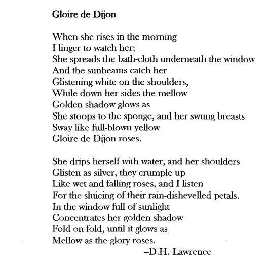 Gloire de Dijon DH Lawrence